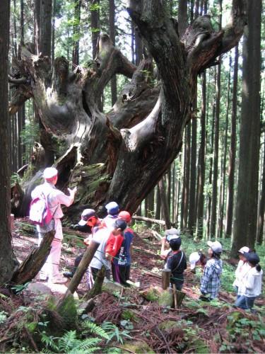 株杉の前で株杉の由来を真剣に聞く参加者たち
